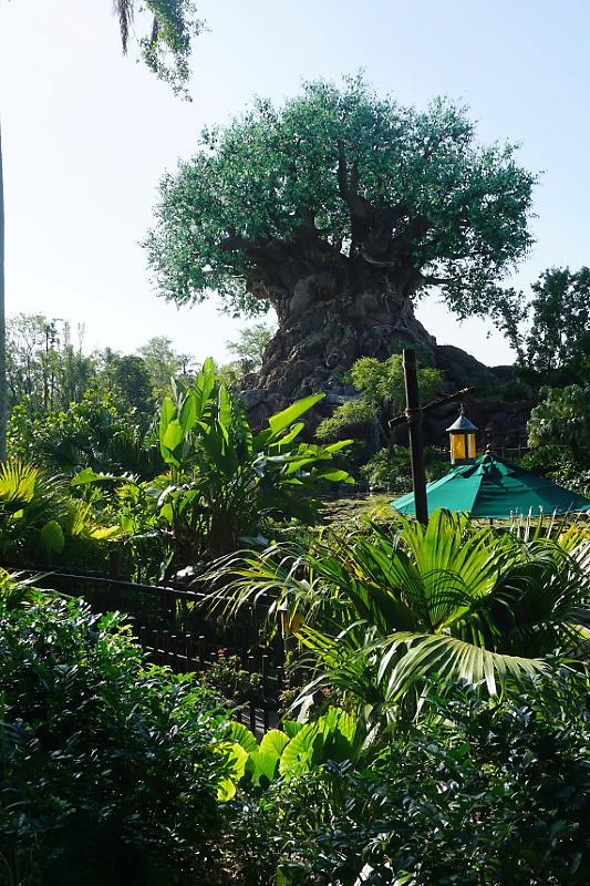 """The happiest place on Earth""  Walt Disney Wolrd Port Orléans Riverside du 11 au 20 Avril 2018 - Page 6 Dsc01939"