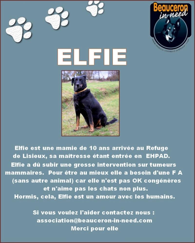 ELFIE - Femelle beauceronne de 10 ans à sortir d'un refuge Elfie10