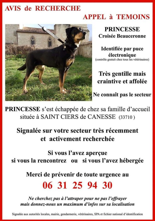 PRINCESSE - femelle Beauceron - 2009 - Dépt 33 Prince11