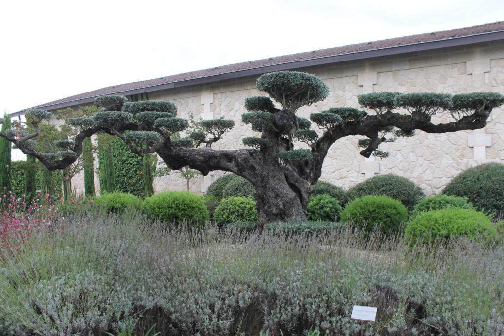 Le jardin du Château Pape Clément.  (33) Img_6311