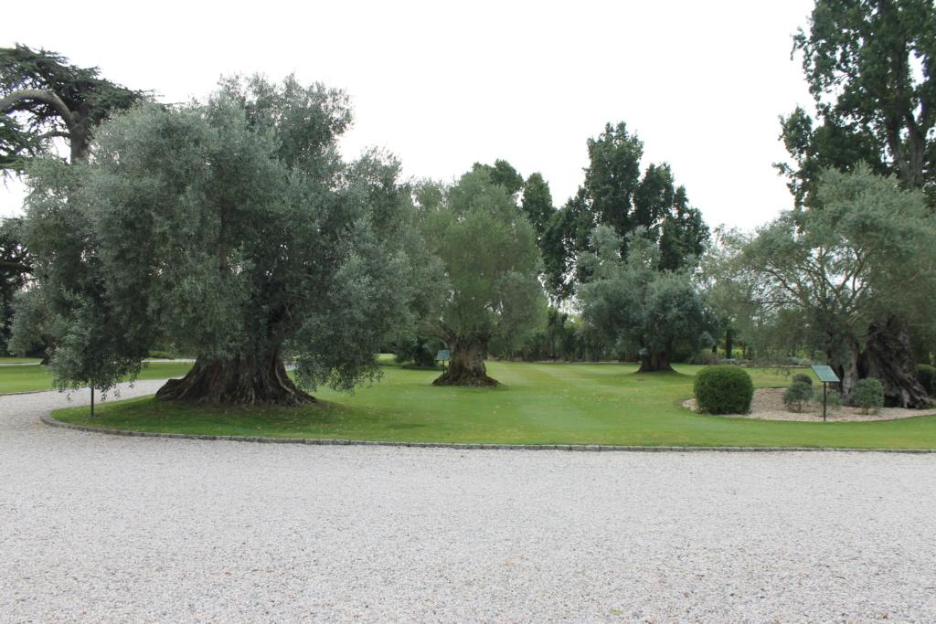 Le jardin du Château Pape Clément.  (33) Img_6317