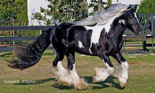 Nouvelle arrivage de chevaux  30272910