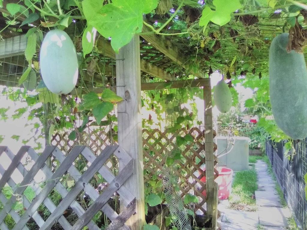 Vườn Rau Tháng 8 C1710