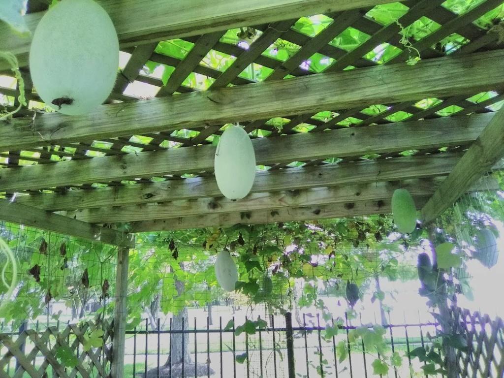 Vườn Rau Tháng 8 C2810