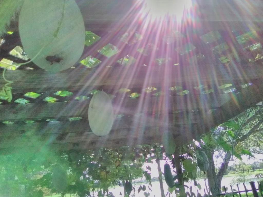 Vườn Rau Tháng 8 C2910
