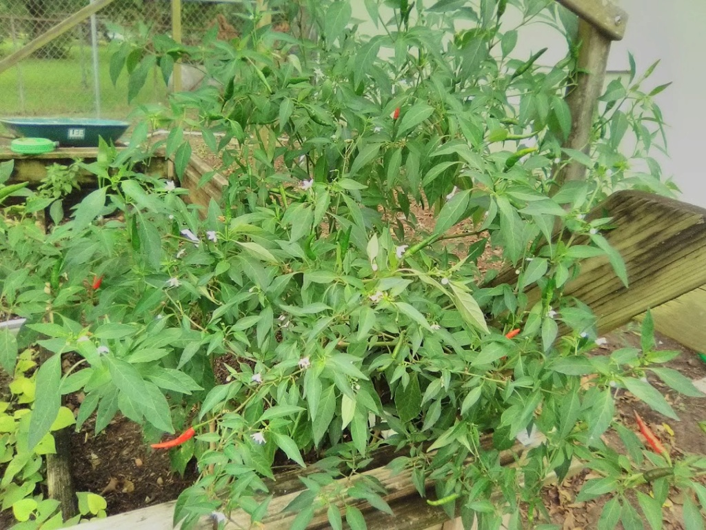 Vườn Rau Tháng 8 C3010