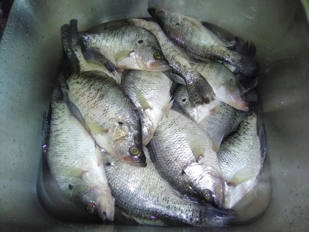 Chả cá rô Caro110