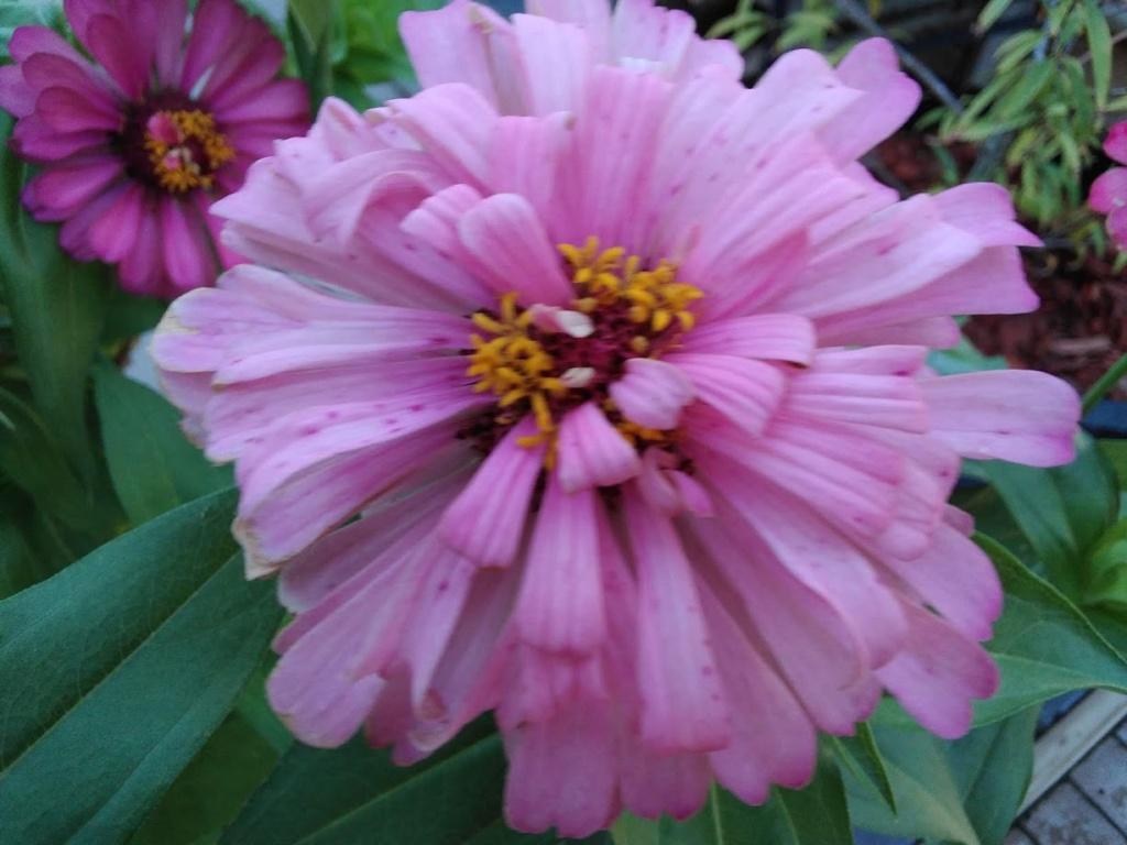 Hoa trong vườn Hoa10