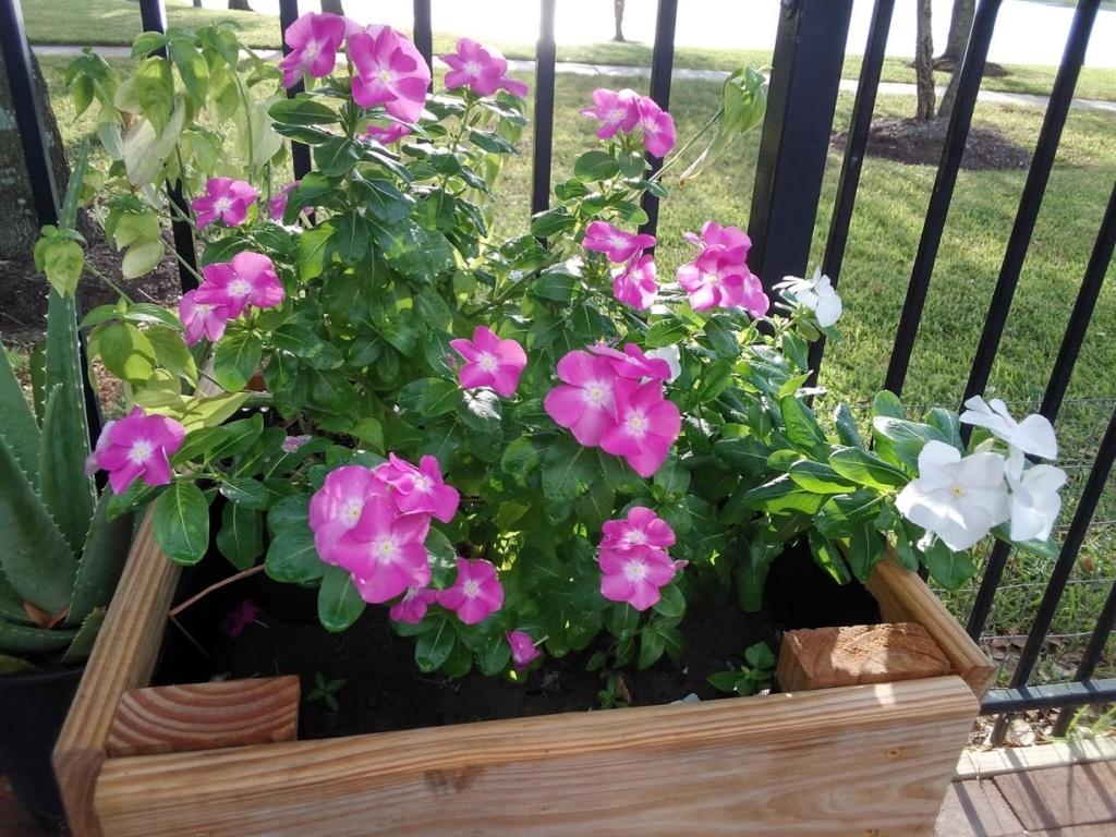 Hoa trong vườn Hoa1010