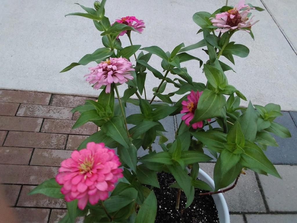 Hoa trong vườn Hoa110