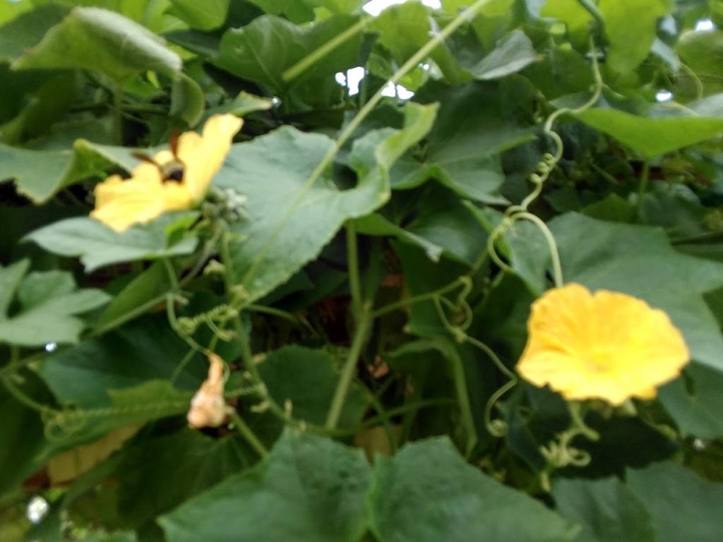 Hoa trong vườn Hoa1210