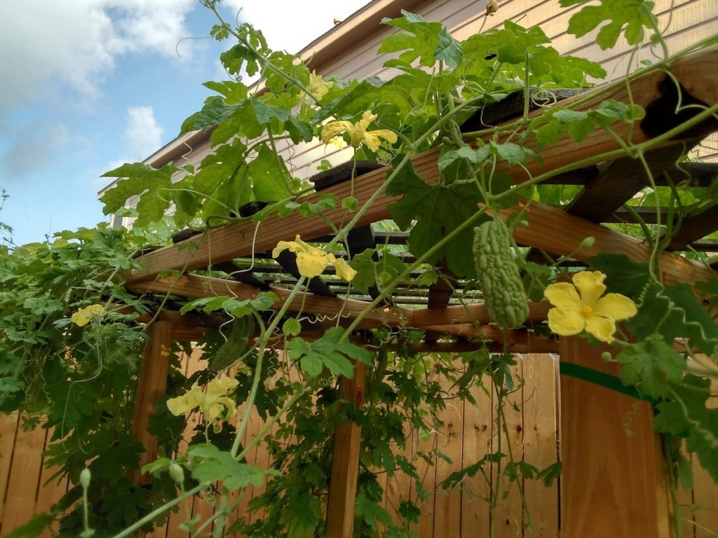 Hoa trong vườn Hoa1310