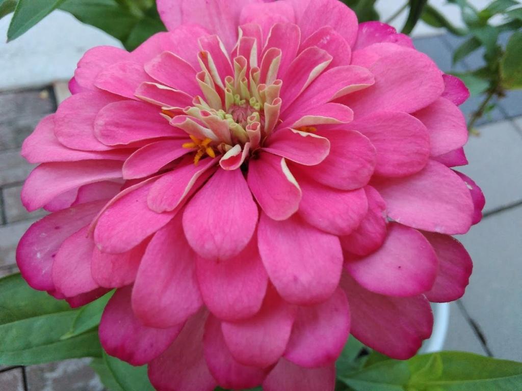 Hoa trong vườn Hoa210
