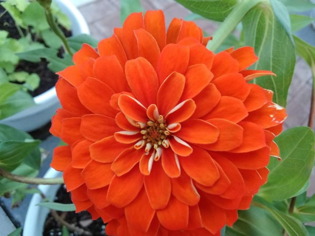Hoa trong vườn Hoa310