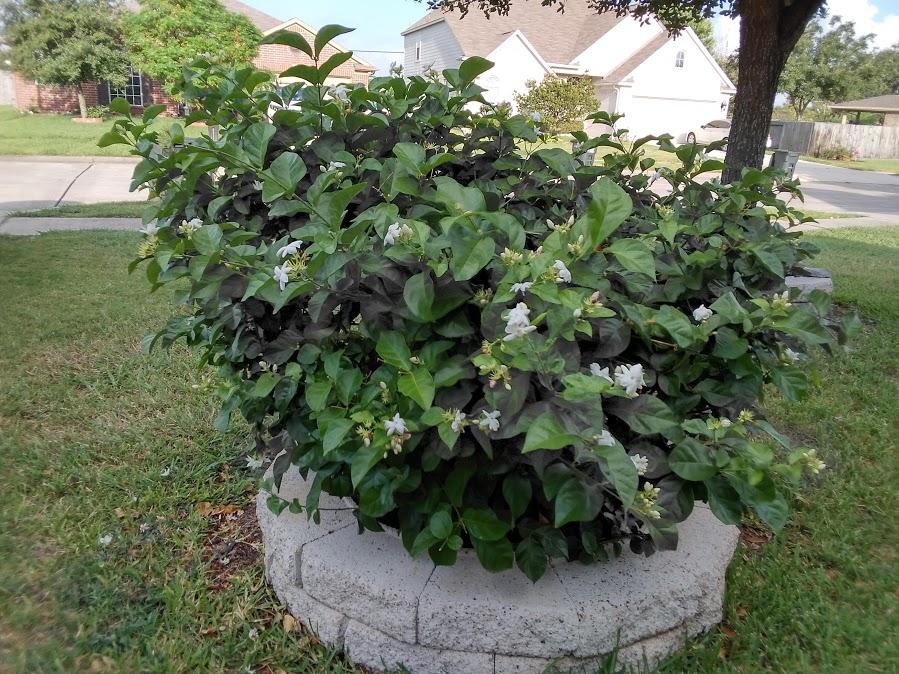 Hoa trong vườn Hoa510