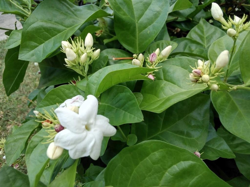 Hoa trong vườn Hoa610