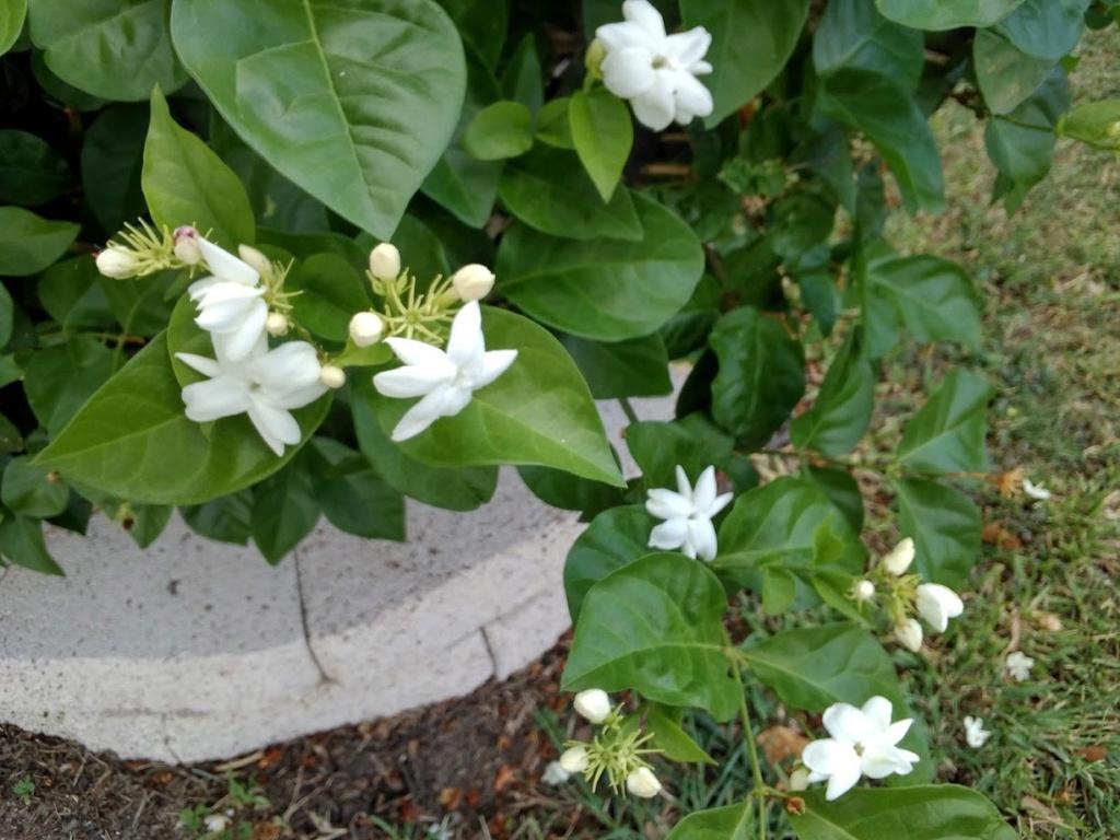 Hoa trong vườn Hoa710