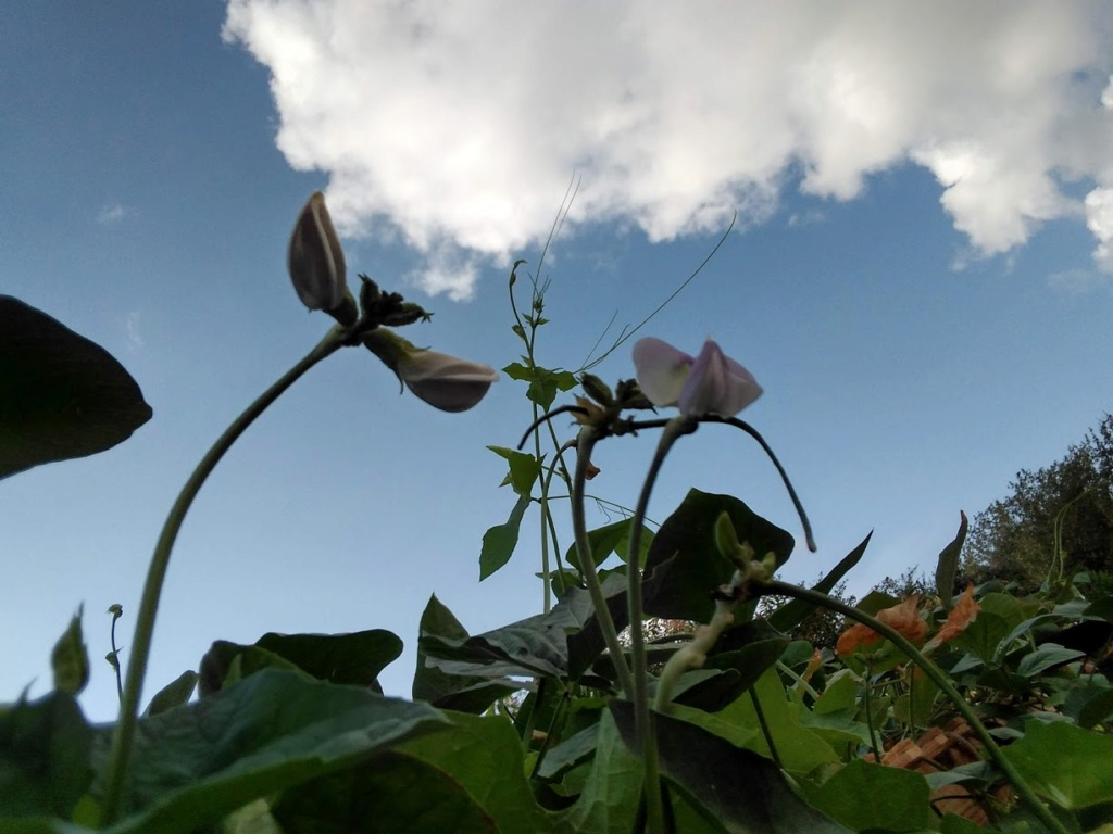 Hoa trong vườn Hoa810