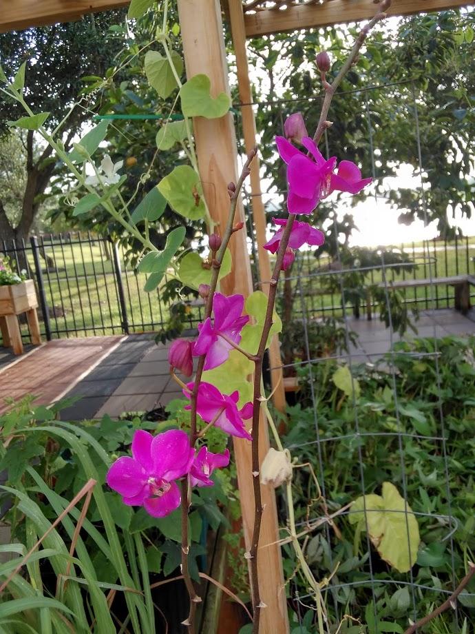 Hoa trong vườn Hoa910