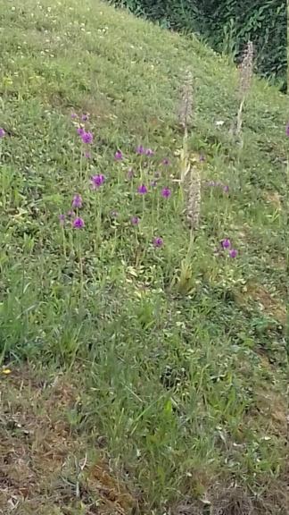 Des orchidées et des blockhaus... 20200610