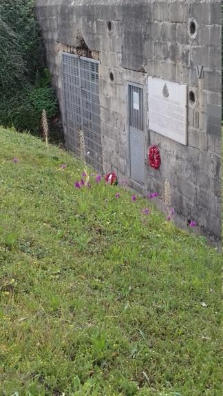Des orchidées et des blockhaus... 20200612