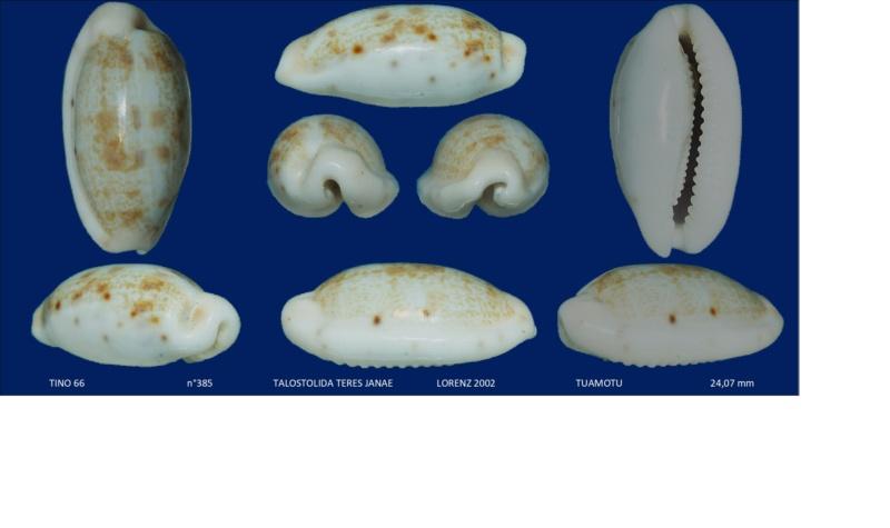 Talostolida teres janae - (Lorenz, 2002) Sans_t26