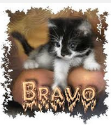 Présentation nouvelle du forum - Page 3 Bravo10