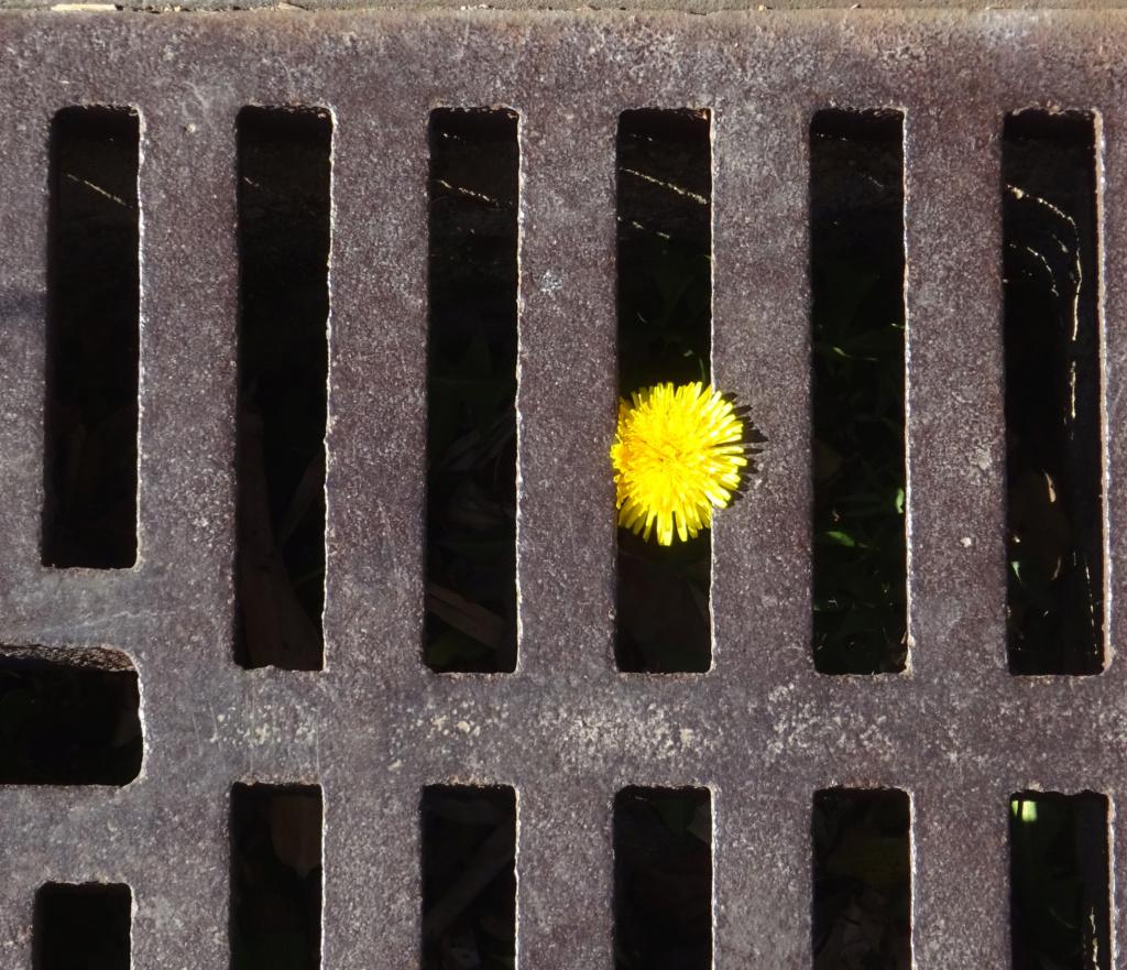 Un jour, un instant, une photo - Page 2 Dsc01823