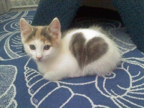 Pour les amoureux des chats - Page 2 Chat-c10