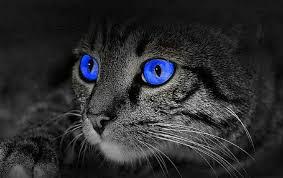 Pour les amoureux des chats - Page 2 Chat210