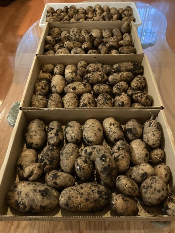 2021 SFG in Brooks, Ga - Page 2 Potato25