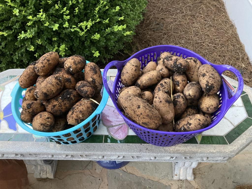 2021 SFG in Brooks, Ga - Page 2 Potato26