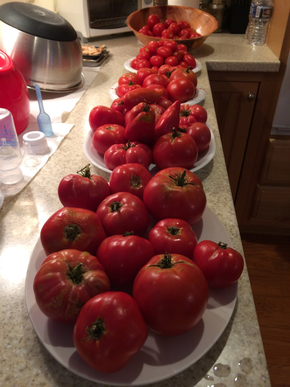 2018/2019 SFG in Brooks, GA - Page 4 Tomato11