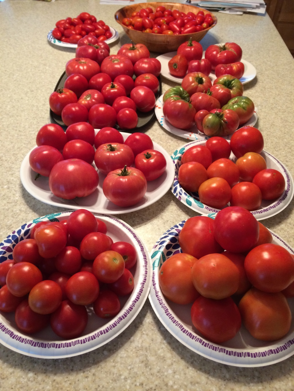 2018/2019 SFG in Brooks, GA - Page 4 Tomato12