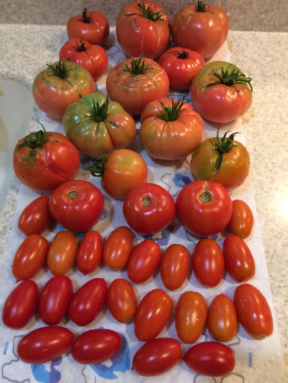2018/2019 SFG in Brooks, GA - Page 6 Tomato21