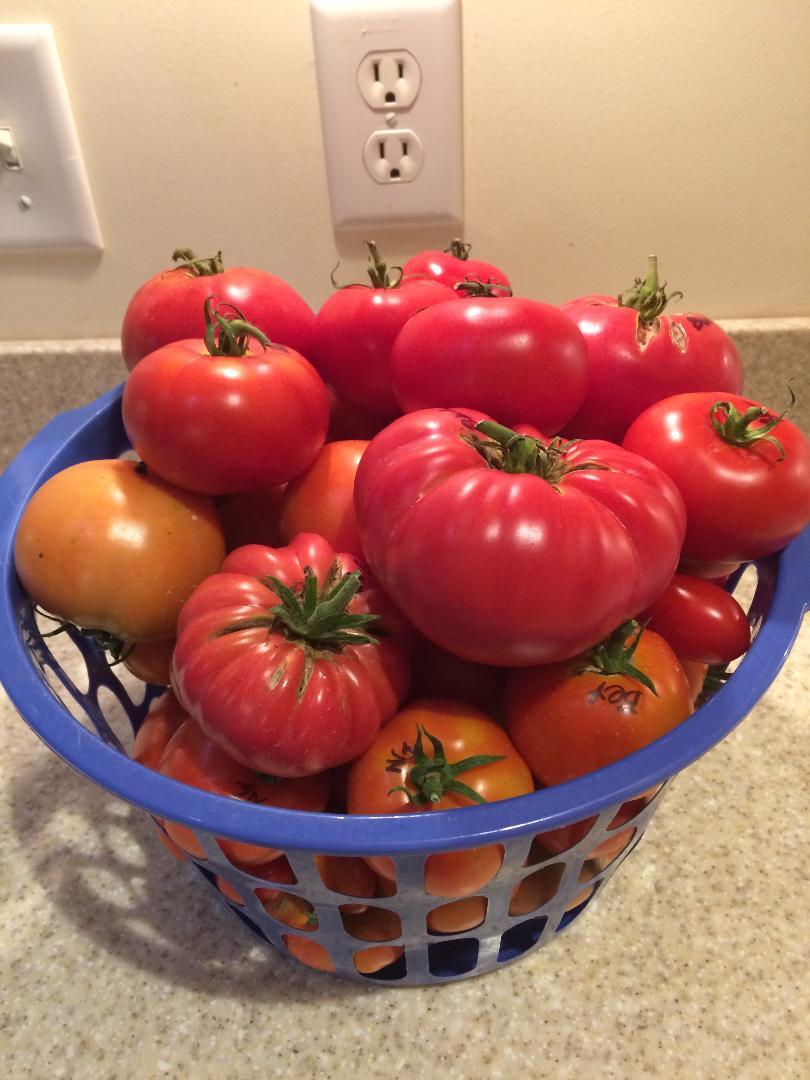 2018/2019 SFG in Brooks, GA - Page 9 Tomato34