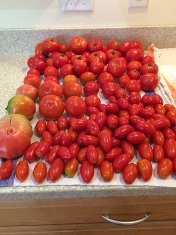 2018/2019 SFG in Brooks, GA - Page 10 Tomato41