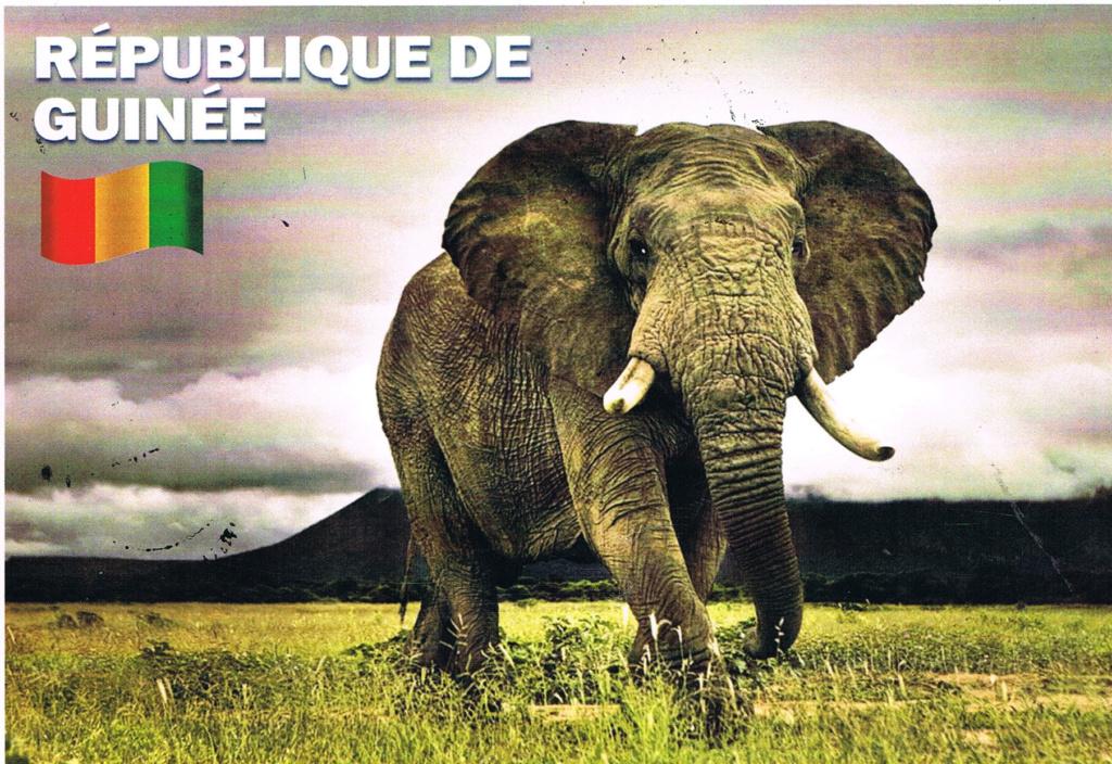 Postales deade Guinea (Julio 2018) Zjuanp10