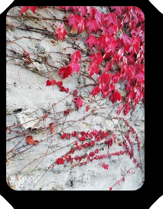 Краски осени во Франции 11_1110