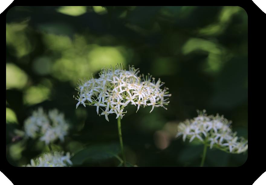 Умиротворяющая сила природы (фото) 13_1318