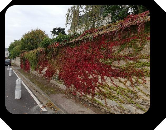 Краски осени во Франции 22_2211