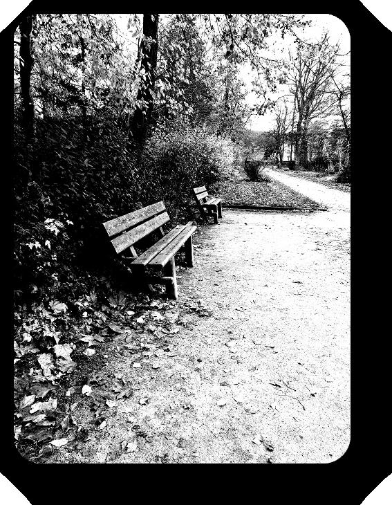 Очарование Франции в черно-белом облачении 24_2413