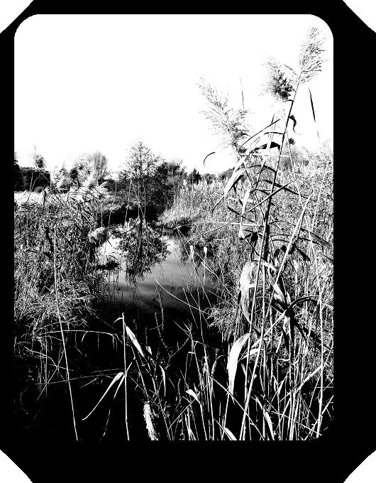 Очарование Франции в черно-белом облачении 27_2713
