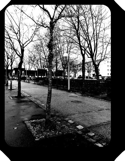 Очарование Франции в черно-белом облачении 35_3513