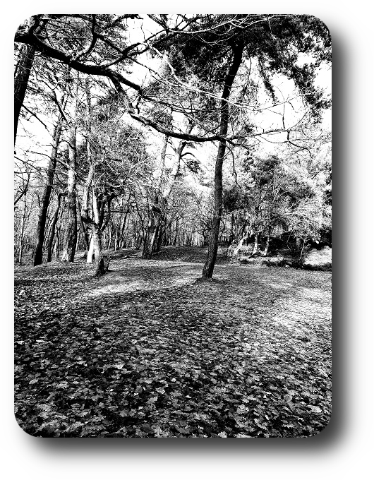 Очарование Франции в черно-белом облачении 41_4113