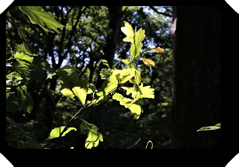Умиротворяющая сила природы (фото) 4_421