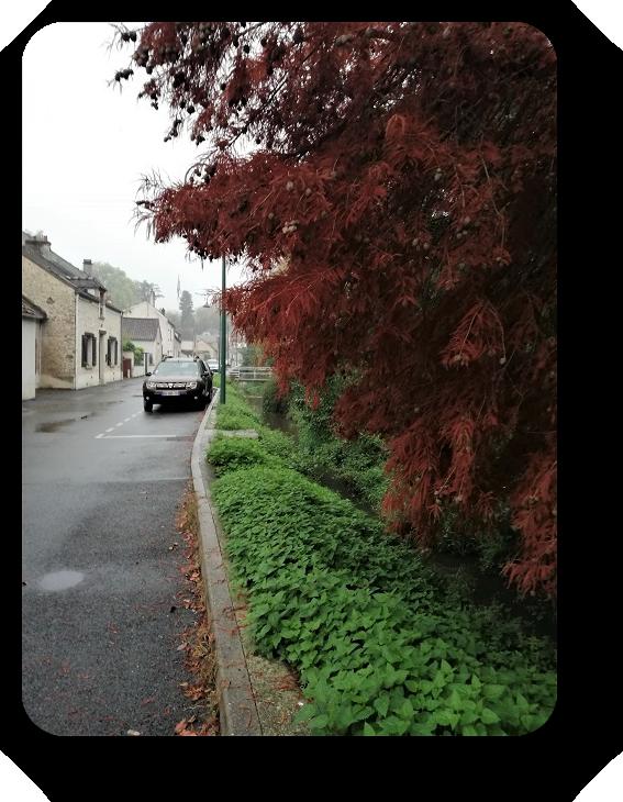Краски осени во Франции 50_5013
