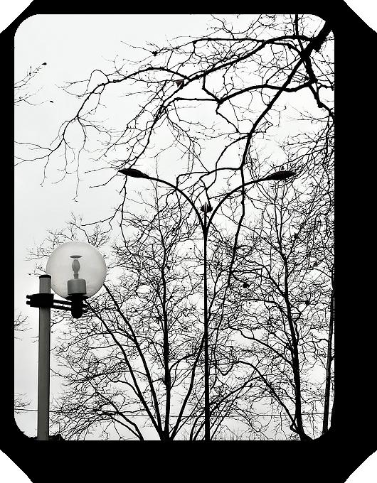 Очарование Франции в черно-белом облачении 51_5114