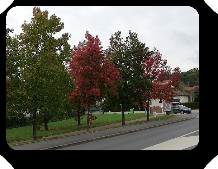 Краски осени во Франции 56_5611