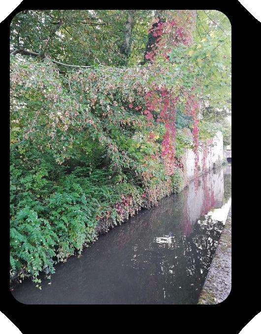 Краски осени во Франции 5_510